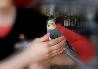 Parrot receiving reiki